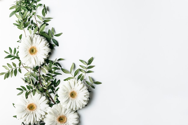 Top view of white daisies