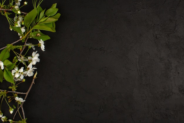 어두운 바닥에 상위 뷰 흰색 꽃