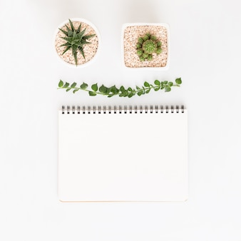 Top view white notebook with cactus on white