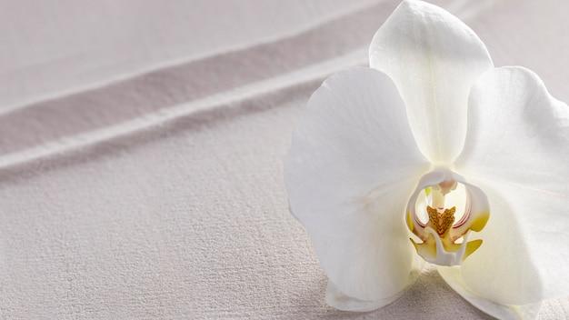 Vista dall'alto l'orchidea bianca fiorì