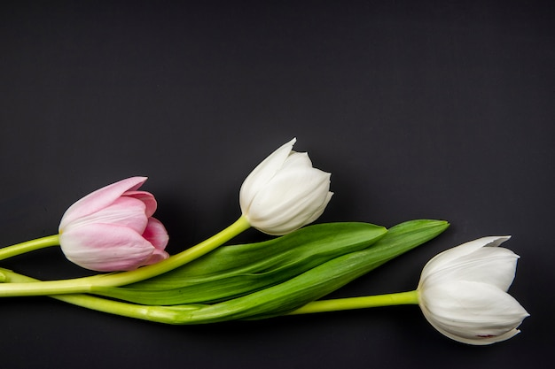 Top view of white and pink color tulips isolated on black table with copy space