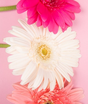 Top view of white pink and fuchsia color gerbera flowers isolated on pink background