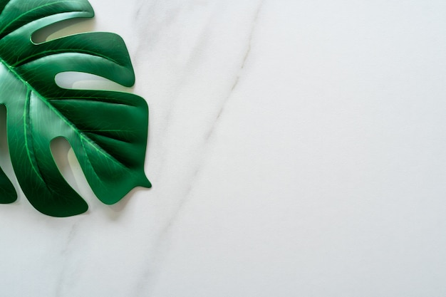 Top view of white tone marble texture abstract background with green natural leaf as frame decoration.