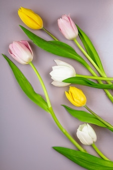 Top view of white yellow and pink color tulip flowers isolated on light purple background