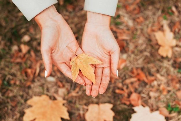 秋の葉を保持しているトップビュー女性