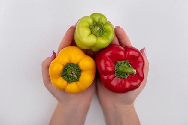 Donna di vista superiore che tiene i peperoni dolci colorati nelle sue mani su una priorità bassa bianca
