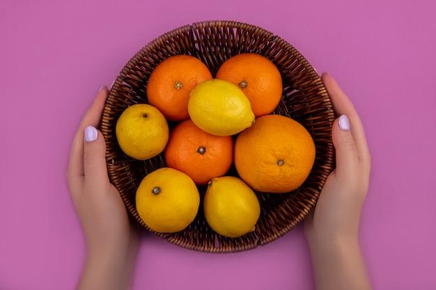 ピンクの背景のバスケットにレモンとオレンジとグレープフルーツを保持している上面図の女性