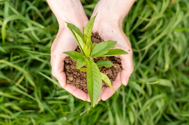 Top view woman holding soil with plant in hands