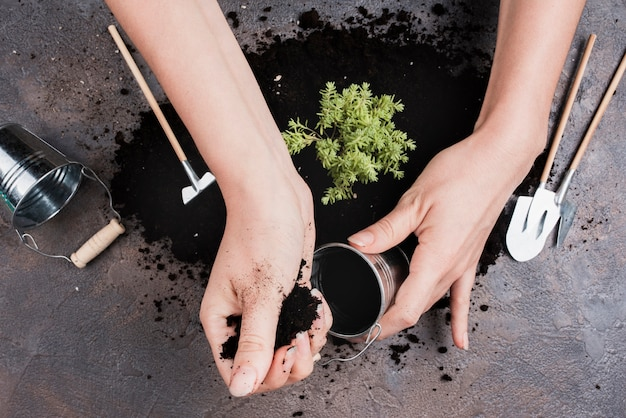 Top view of woman putting soil in bucket