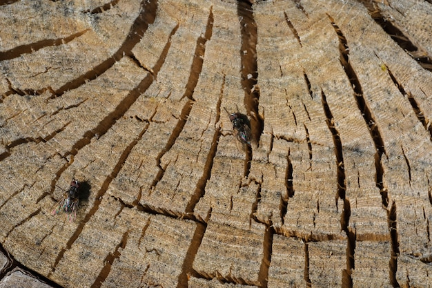 Top view of a wooden natural stump