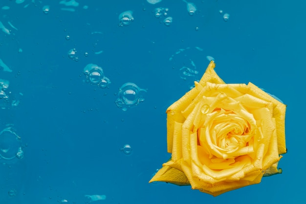 Top view yellow rose in water with copy space
