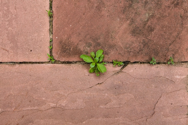 Top view young tree growth form sand stone floor