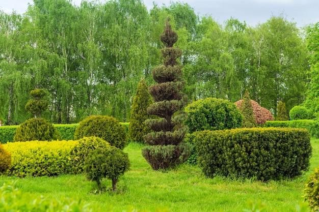 공원 디자인의 장식 예술. 여름 도시 공원에서 트리밍된 나무와 관목. 상록수 조경공원.