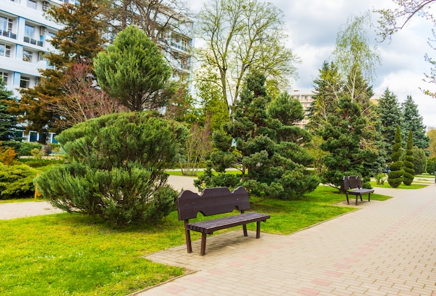 Topiary art of junipers, yew taxus baccata and thuja in autumn city street. formed evergreens in resort area of goryachiy klyuch. nature concept for design. selective focus