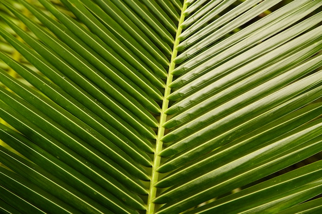 Topical coconut leaves green background