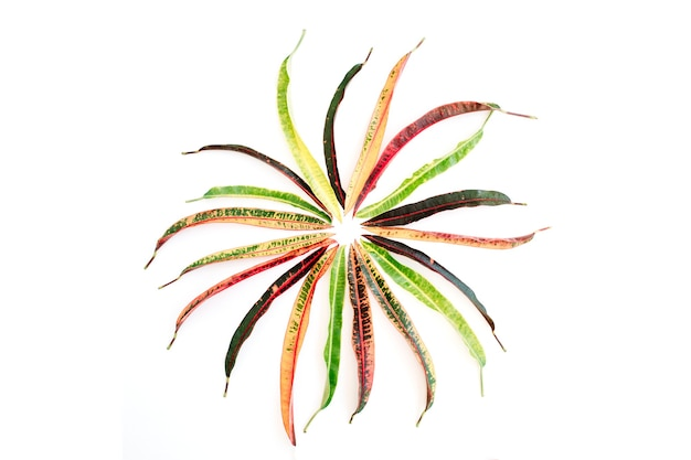 Topical exotic colored leaf on white