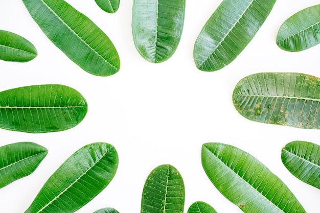 Topical green leaf frame on white