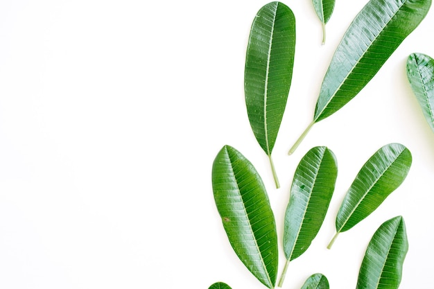 Topical green leaf on white