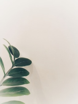Topview of green leaves are placed on white wall, look like a simple and minimal style.