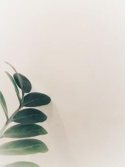 녹색 잎의 topview는 흰색 벽에 배치되며 단순하고 최소한의 스타일처럼 보입니다.