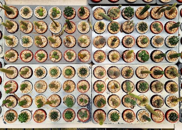 サボテン農場のトップビューの小さなサボテンと多肉植物