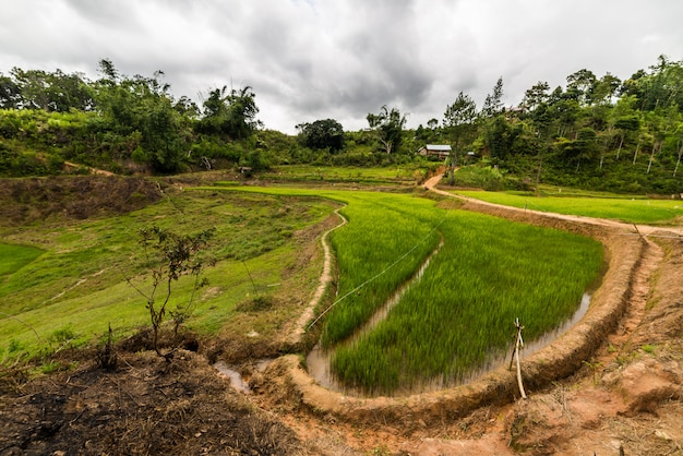 Toraja landscape and traditional village in sulawesi indonesia
