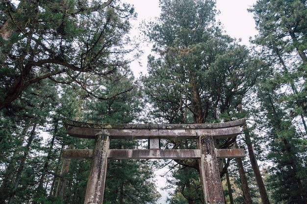 Torii japan temple shrine in forest