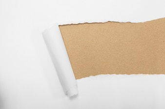 Torn package rolled up curvl paper with blank white copyspace