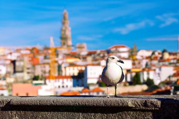 Чайка и torre dos clerigos в лиссабоне, португалия