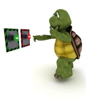 Tortoise doubting
