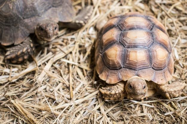Tortoise, turtle