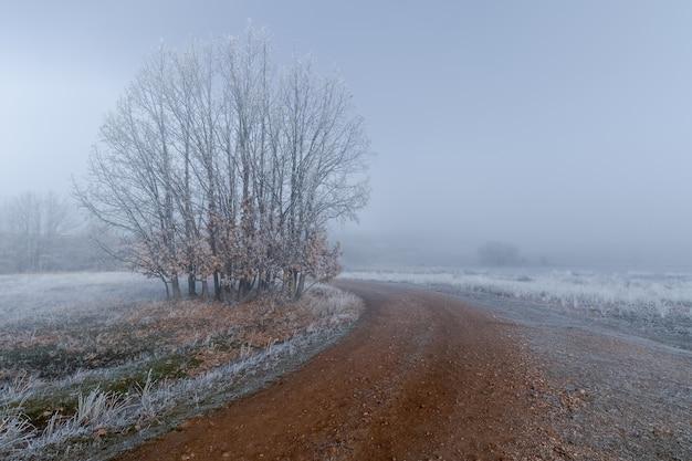 地平線に霧があり、地面と植物に氷がある、完全に凍った冬の風景。曲がった未舗装の道路。セゴビア、スペイン、カスティーリャレオン。