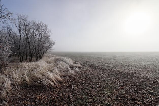 地平線に霧があり、地面と植物に氷がある、完全に凍った冬の風景。曲がった未舗装の道路。セゴビア、スペイン、ヨーロッパ。