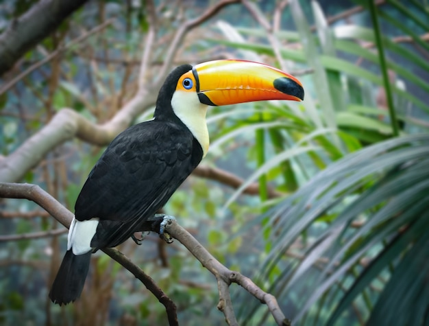 Toucan sits on a tree branch with jungle