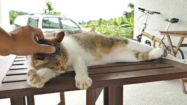 Прикоснитесь к спящей кошке, лежащей на деревянном столе на открытом воздухе