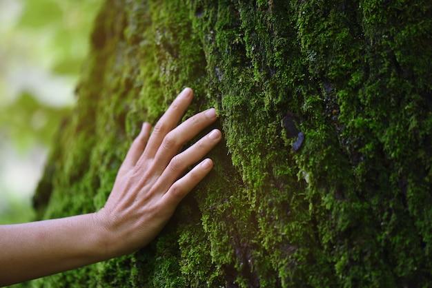 森の中の新鮮な苔のタッチ