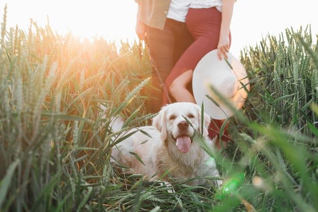 새로운 삶에 대한 행복한 기대의 감동적인 순간. 강아지와 함께 자연 속에서 산책. 젊은 임신 부부입니다.임신한 여자입니다. 가족과 임신. 사랑과 부드러움. 행복과 평온.