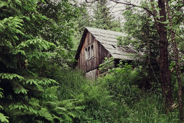 Tourism, mountains, lifestyle, nature, people concept - little hut in the forest. lonely little hut in forest. forest hut. mountain. little hut in beautiful green forest in mountains.