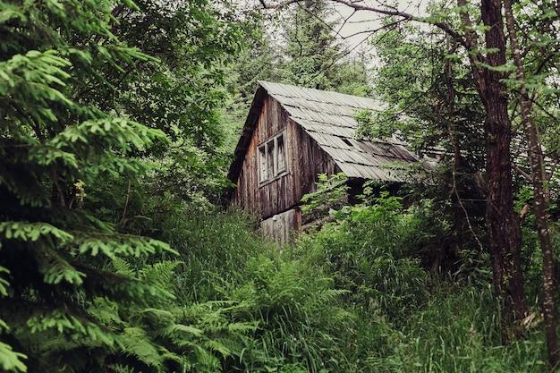 관광, 산, 생활 방식, 자연, 사람 개념 - 숲 속의 작은 오두막. 숲에서 외로운 작은 오두막. 숲속 오두막. 산. 산속의 아름다운 녹색 숲에 있는 작은 오두막.