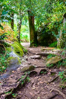 Tourism trail in the woods in phu hin rong kla national park background