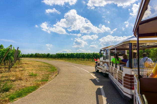 Tourist excursion train in champagne vineyards at montagne de reims on countryside village