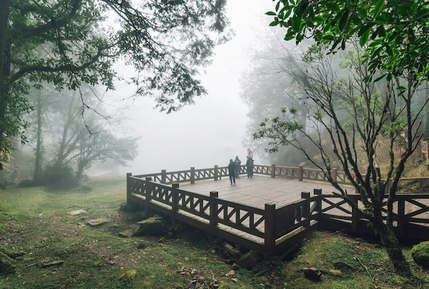 Tourist group standing on wooden platform with cedar trees and fog in the background in the forest in alishan national forest recreation area in winter in chiayi county, alishan township, taiwan.