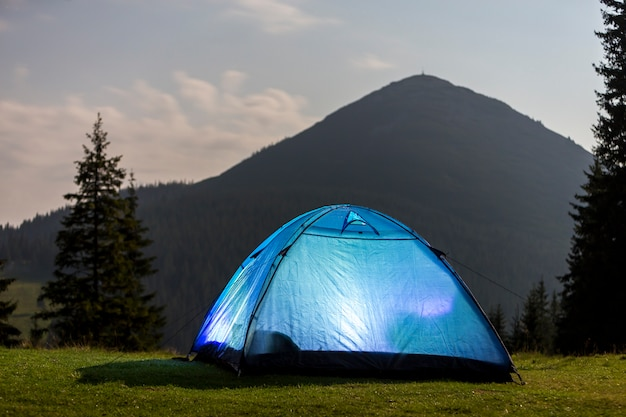 Tourist hikers bright blue tent on green grassy forest clearing among tall pine trees under clear morning sky.