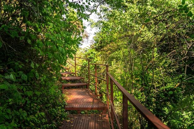 녹색 숲, 아열대 나무의 관광 경로. yew-boxwood grove, sochi national park, krasnodar territory, 러시아