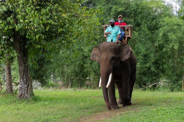 Туристическая езда на слоне через джунгли в лампунг, индонезия
