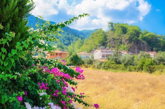 Туристическая ривьера с цветущими растениями, солнцем и отелями