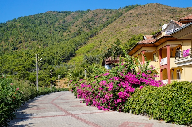 顕花植物、太陽、ホテルのある観光リビエラ