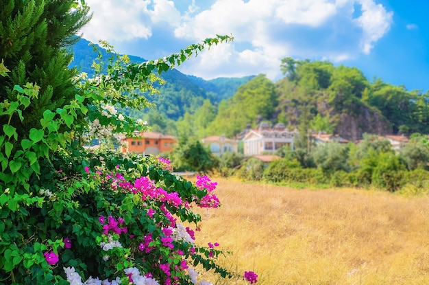 Tourist riviera with flowering plants, sun and hotels