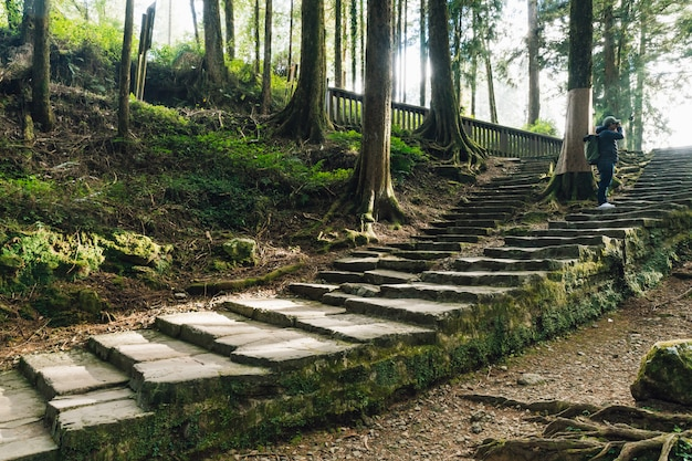 Tourist standing on stone stair and shooting a view of cedar trees with moss