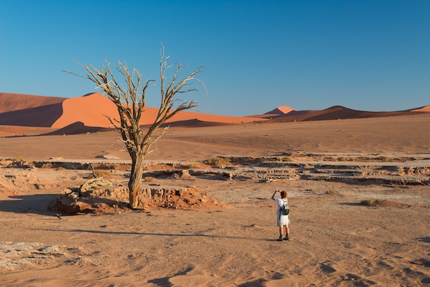 Tourist taking photo at scenic braided acacia tree surrounded by majestic sand dunes at sossusvlei, namib desert, namibia.
